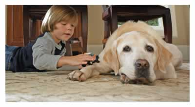 Air Conditioning Units - Comfortable Home - Boy and Dog