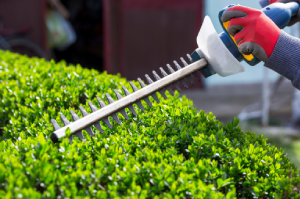 trimming bushes – Summer Saving Tips - Fort Myers - Sunset Air & Home Services