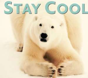 Polar bear staying cool – Cooling tips for summer Part 2 - Sunset Air and Home Services – Fort Myers-300 x 266 jpg