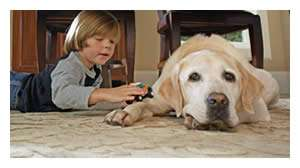 A Boy and His Dog Enjoy Their Air Conditioning Units - Sunset Air and Home Services - Fort Myers FL - 300 x 168