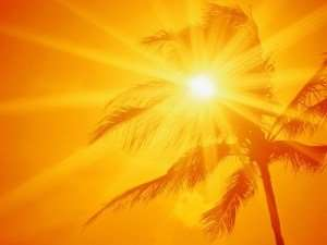 Hot sun shining through fort myers palm tree-the size of your Florida HVAC matters (Part 1)-Sunset Air Home and Home Services-Fort Myers-300x225