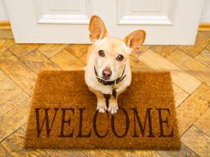 dog-on-welcoming-door-mat-How-to-Improve-Indoor-Air-Quality-Part-1-Sunset-Air-Home-and-Home-Services-Fort-Myers-300x225.jpg