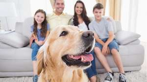 Family With Dog-10 Signs You Need AC Repair (Part 2 of 2)-Sunset Air and Home Services-Fort Myers-300x169