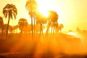 Palm trees and sunshine-Why My AC Compressor Is Not Working-Sunset Air and Home Services-Fort Myers-300x199